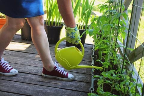 Gardening on a Budget in a small space