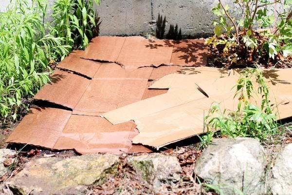 Wet cardboard covering a patch of garden