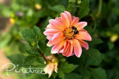 The Ultimate Companion Planting Guide Part 2: Pollinators
