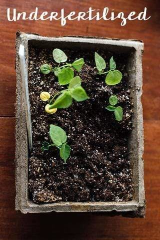 What's Wrong with My Seedlings?