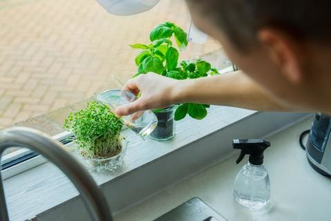 Male Gardener Watering Windowsill Garden