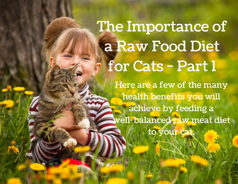 Raw Food Diet for Cats - Part 1