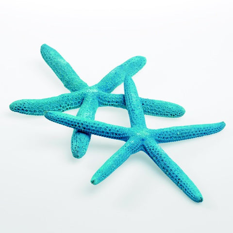 "22725.31 Starfish 4-6""x 10 Pcs - Blue - CS(24)"