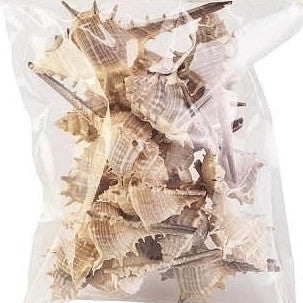 73270 Seashells 5.5 oz CS(6)