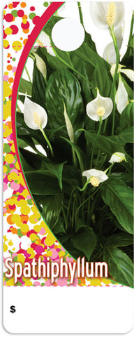 CT0030 Care Tag - Spathiphyllum