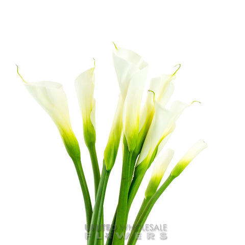Calla Lilies Large White