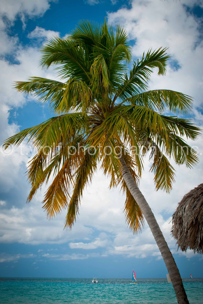 CB 035 - Negril Beach Palm