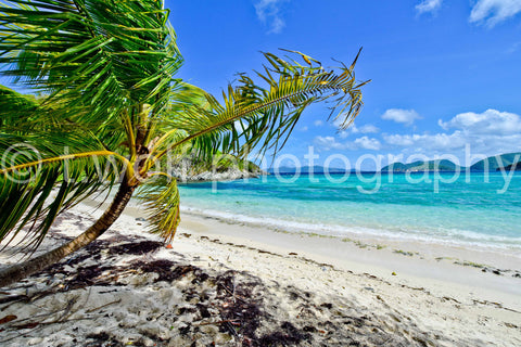 CB 122 - Breezy Beach Palm