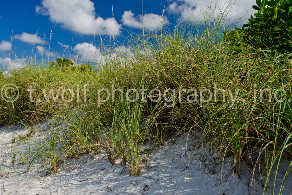 FL 017 - Naples Beach Dunes