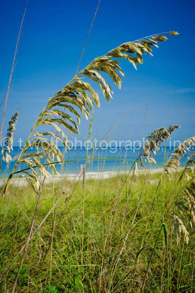 FL 018 - Beach Grass View