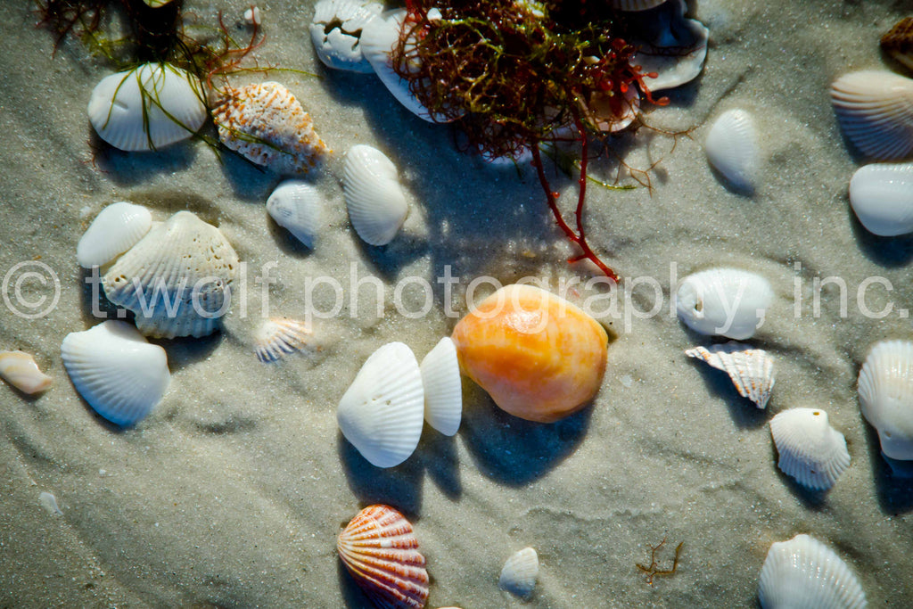 FL 019 - Sanibel Island Shells