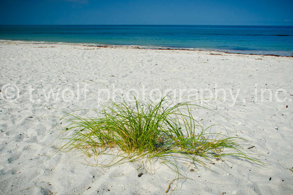 FL 020 - Beach Grass