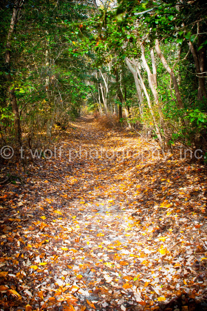 NE 033 - Fall Leaves Trail