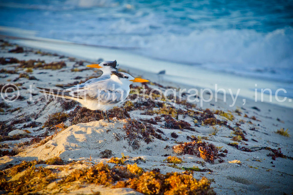 SB 028 - Sunset Beach Birds