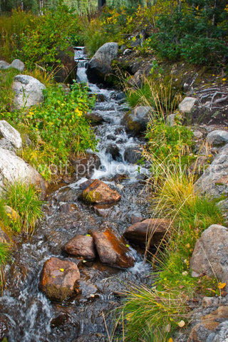 SW 025 - New Mexico Mountain Stream