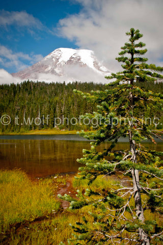 WC 008 - Mt. Rainier Evergreen