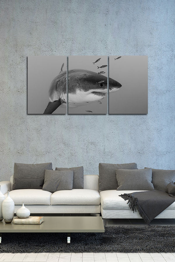 "Z Series Black and White ""The Mighty Great White"""