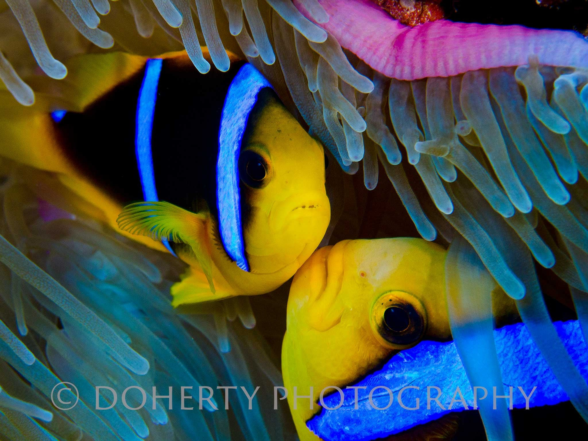Fish Lips - Doherty Photography