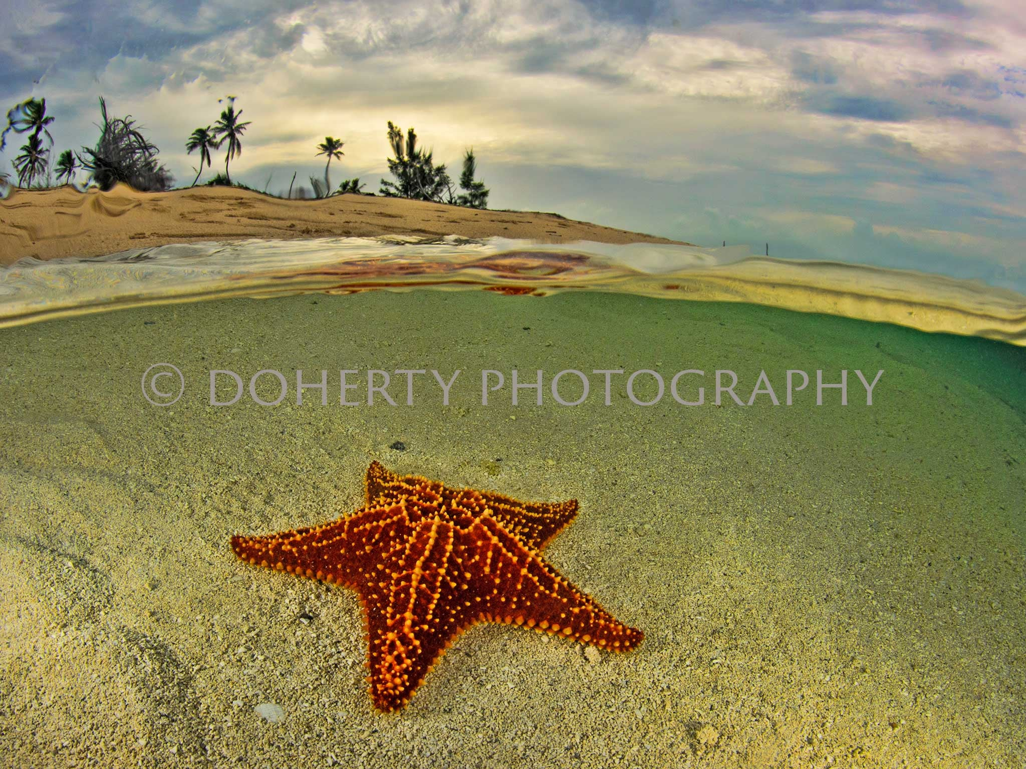 Morning Star - Doherty Photography
