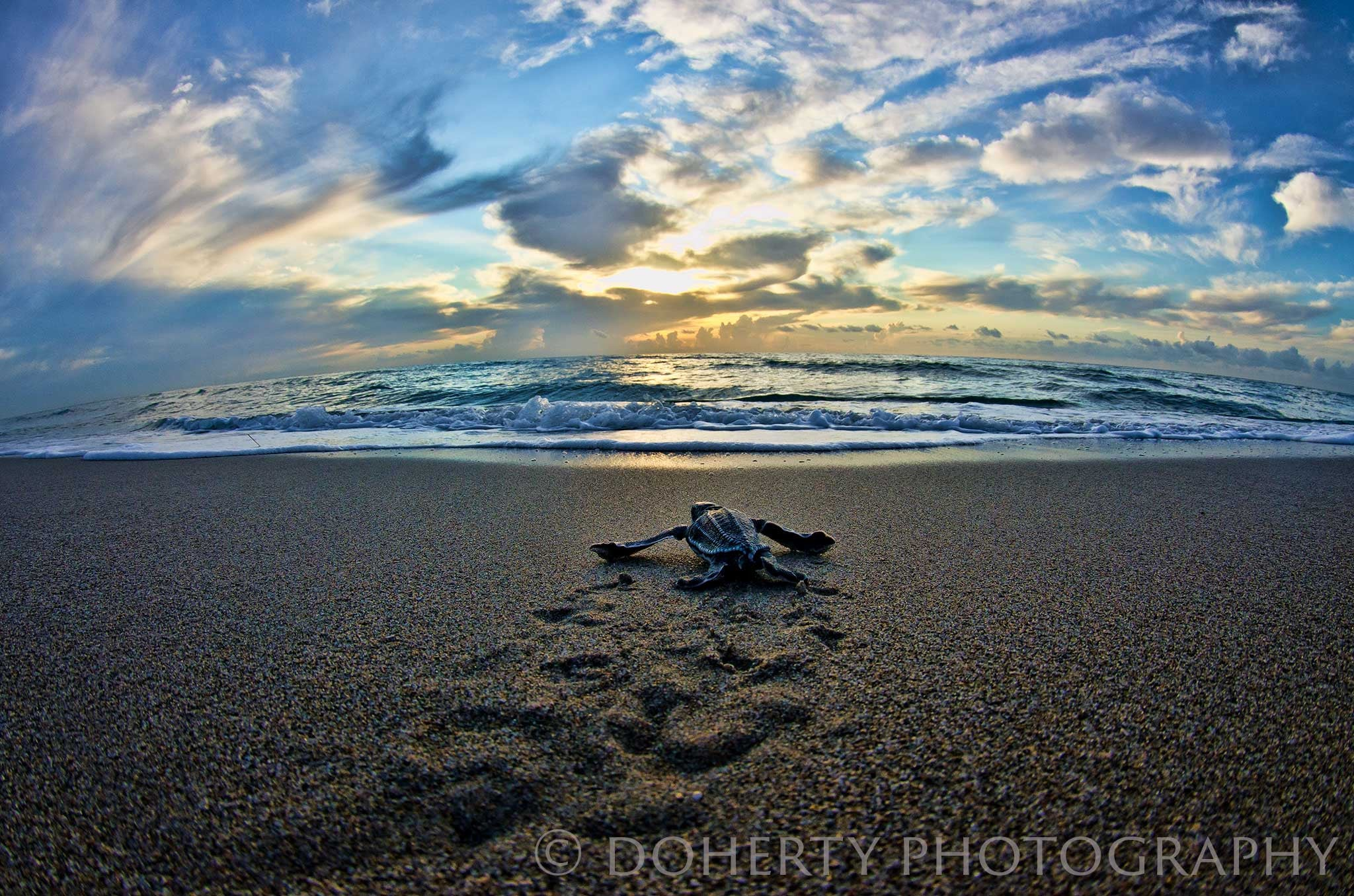 The Long Journey - Doherty Photography