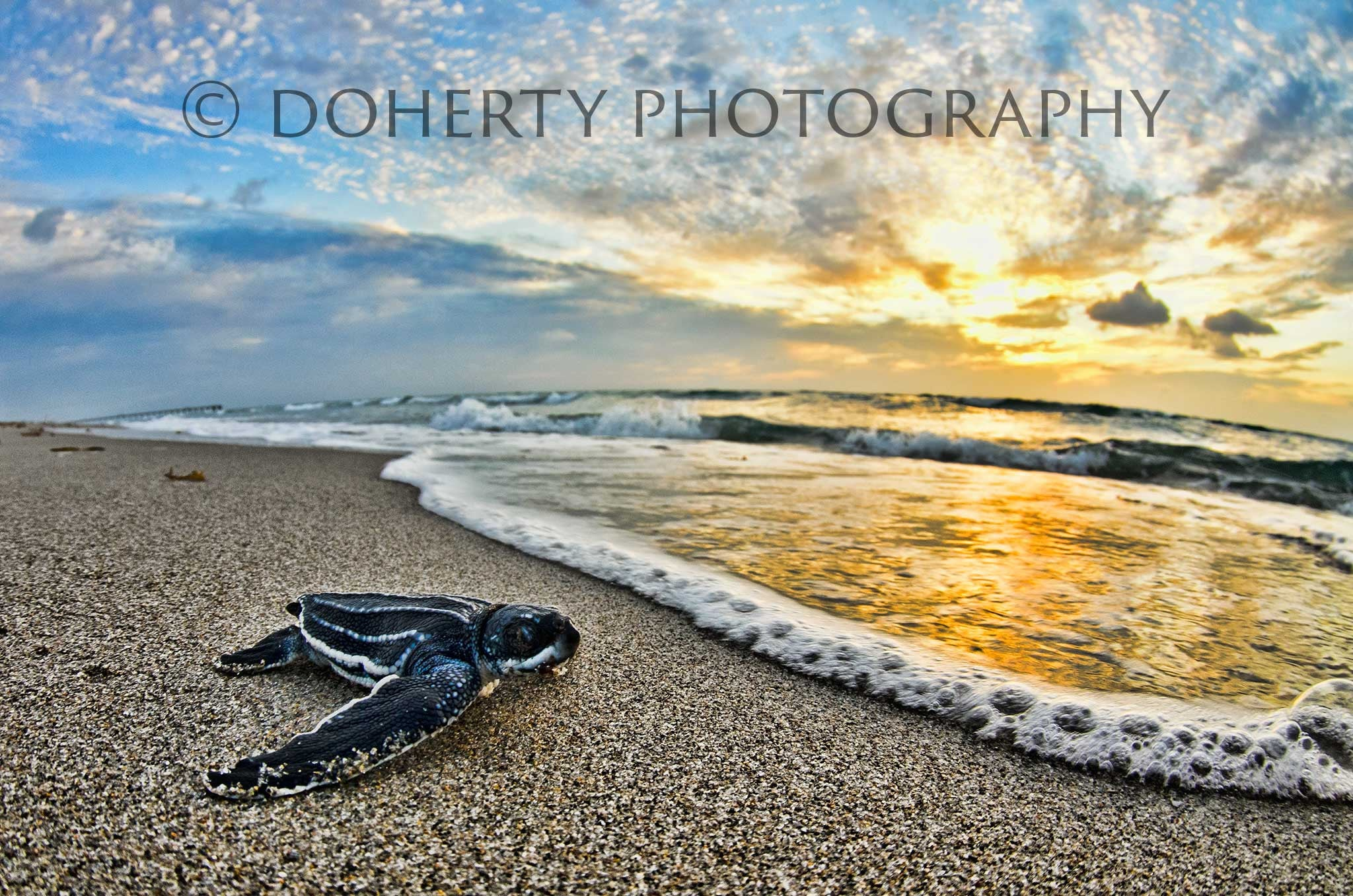 Surfs Up - Doherty Photography