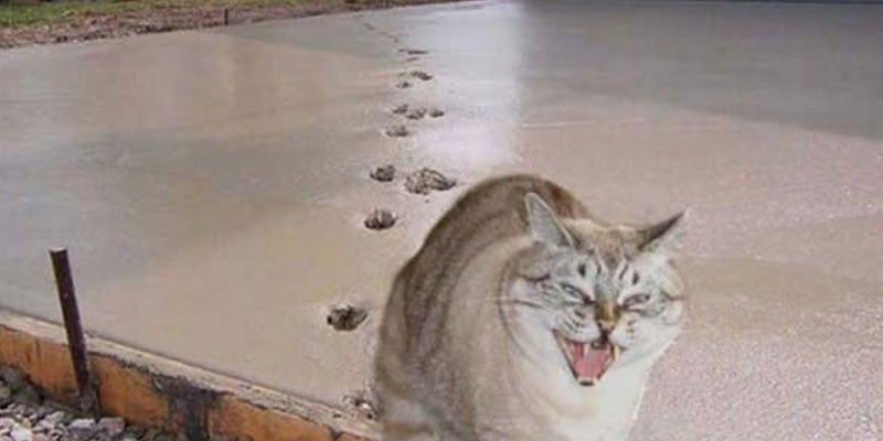 18 Hilarious Cat Pictures