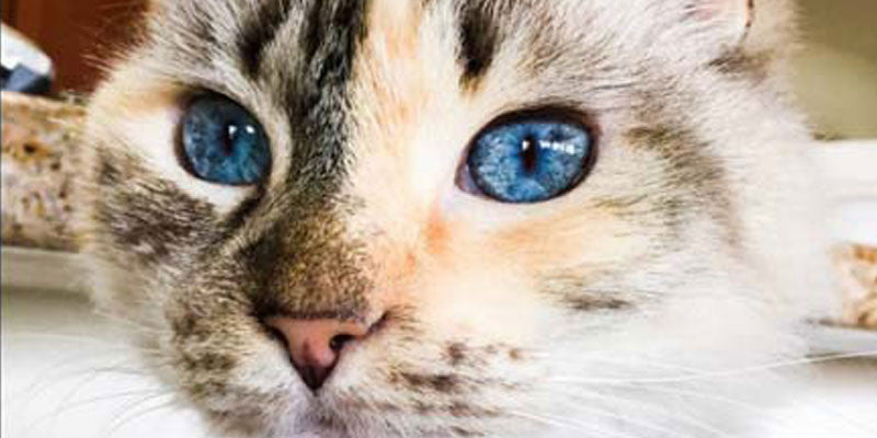 21 Cats With Beautiful Eyes