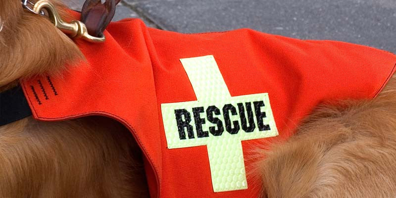 5 Amazing Rescue Dogs