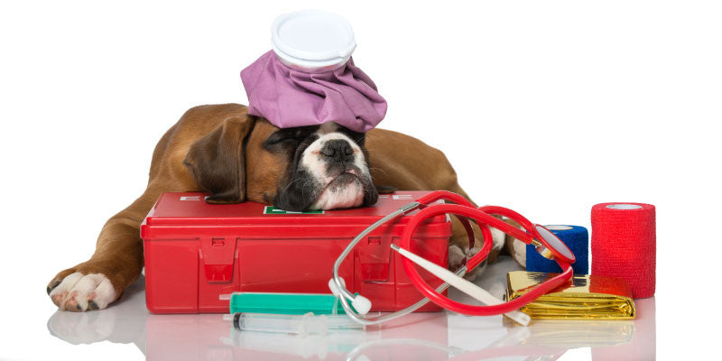 You'll Be Surprised With What All Goes Into Your Pet Emergency Kit