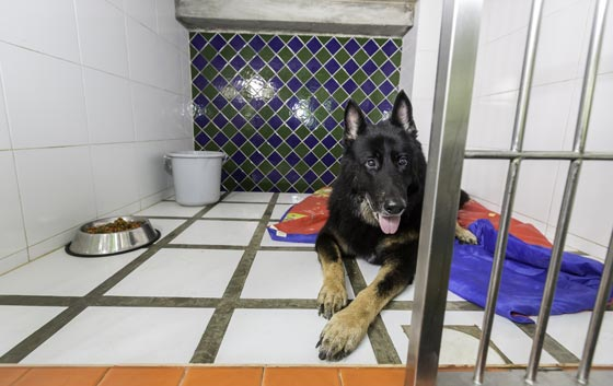 What to Look for in a Boarding Kennel