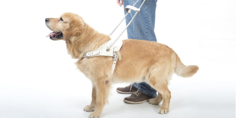 International Guide Dog Day – Let Four Legs Guide the Way