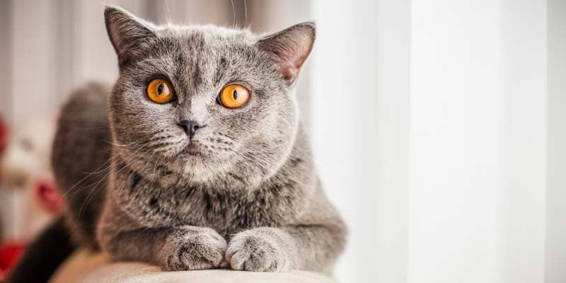 The Shocking Truth Behind Your Cat's Hairball Problem