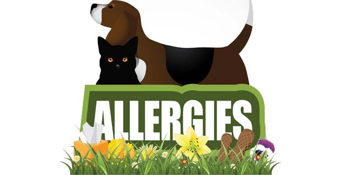 Treating Your Dog's Allergies