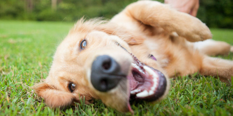 You Are Skyrocketing Your Dog's Stress Levels... And Don't Even Know It!
