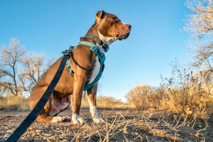 Benefits of Glucosamine for Your Dog