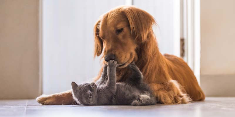 Zoonotic Disease – Illnesses You Can Get From Your Pet!