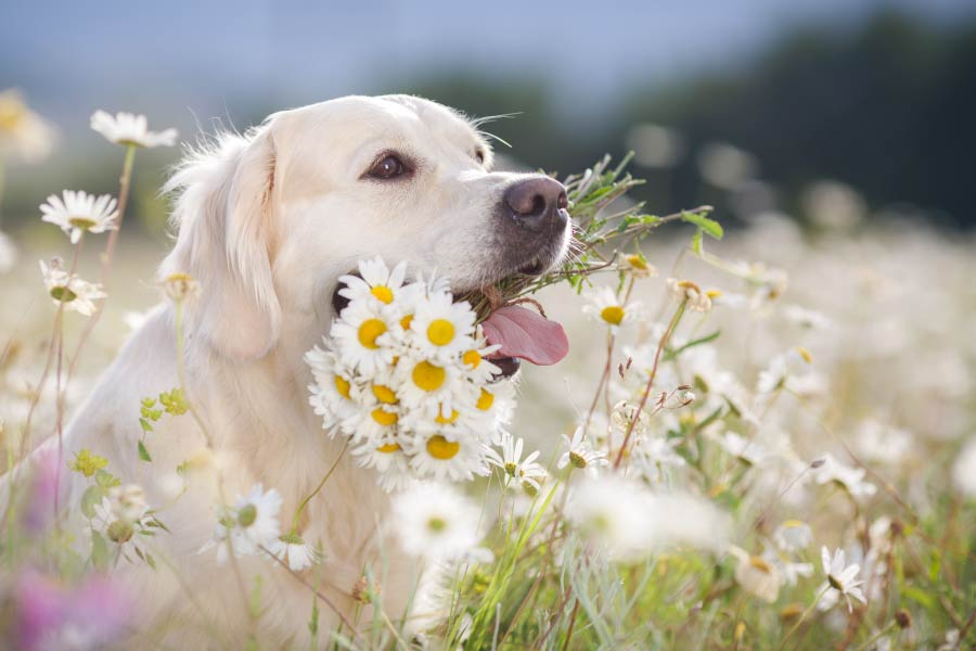 Top 6 Natural Ingredients to Fight Canine Anxiety