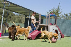Boarding Kennel tips
