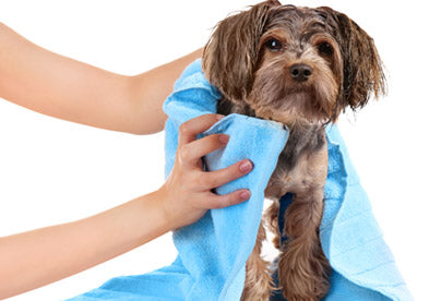 Dry Waterless Shampoo for Dogs