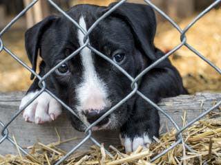 Ban on puppy mills