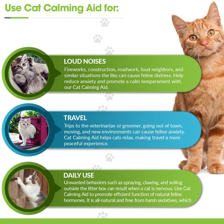 Anxiety relief for cats