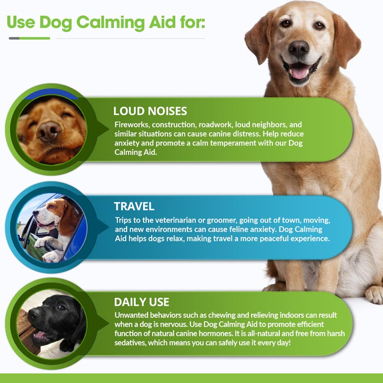 What Is The Best Calming Aid For Dogs