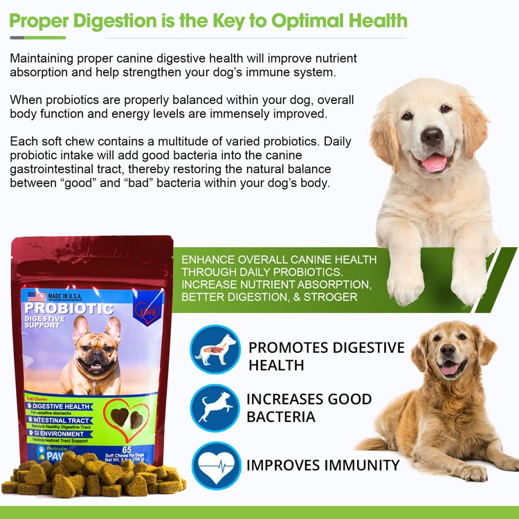 Digestive support for dogs