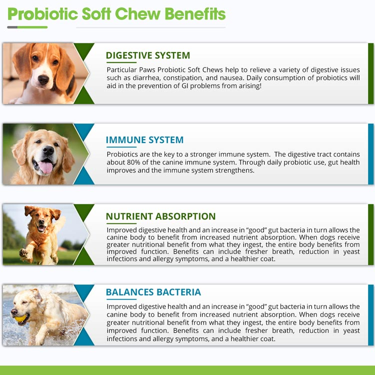 Digestion support for dogs