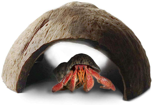 Hermit Crab Hut 5 x 3 Inches Arthropod's Hideout, Raw and Natural Coco Tunnel