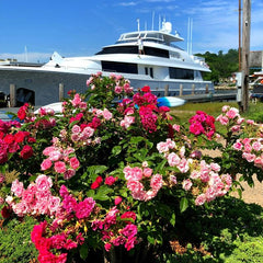 Mystic roses and Yacht Double Eagle