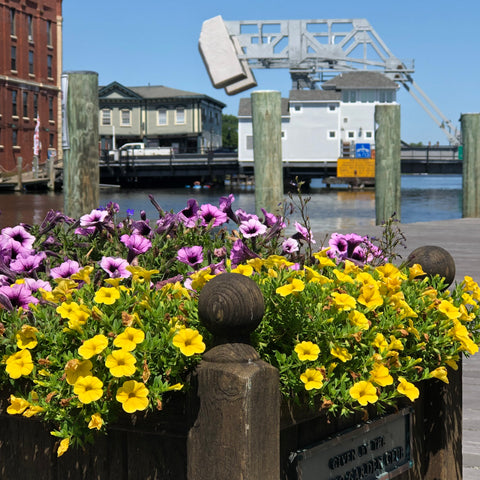 flowers in the park overlooking the drawbridge