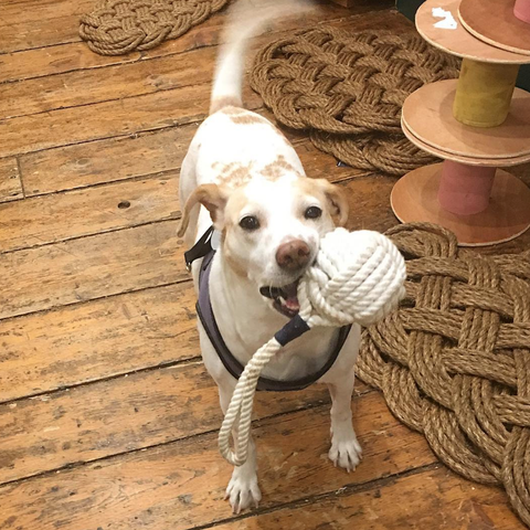 Betsy with Mystic Knotwork dog toy