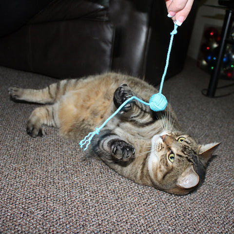 Mystic Knotwork cat toy in action