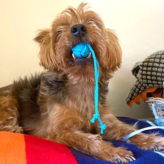 oops dog with cat toy
